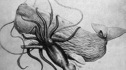 Bí ẩn loài mực khổng lồ tưởng chỉ có trong truyền thuyết