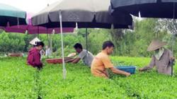 Thái Nguyên: Hơn 15.000 hội viên nông dân được đào tạo nghề