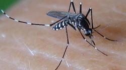 Quảng Trị: Một bệnh nhân tử vong nghi do sốt xuất huyết