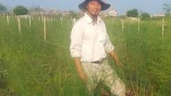 """Nam Định: Lãng tử bỏ lương nghìn đô về làng trồng...""""rau vua"""""""