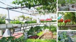 Bà mẹ Hà thành chi mạnh tay thiết kế 100 chậu rau trên sân thượng