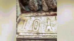 Video: Phẫn nộ cảnh gia đình báo đốm bị thợ săn thảm sát, vứt xác trên xe hơi ở Brazil