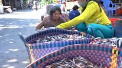 Đồng Tháp: Cuối mùa lũ, dỡ đống chà bắt được cả trăm ký cá chốt