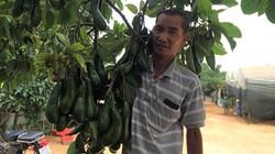"""Lâm Đồng: Nâng cấp các sản phẩm còn thiếu """"sao"""""""