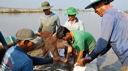 Hậu Giang: Hết lũ, bắt cá ruộng lên bán 10.000-35.000 đồng/ký