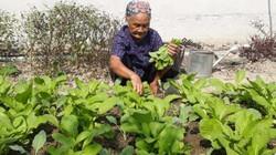 Cụ bà đơn thân 80 tuổi quyết tâm xin ra khỏi hộ nghèo