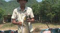 Quảng Bình: Cá trắm sông Son ngon thế nào mà khách ai cũng khen