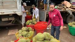 Đắk Lắk: Trồng 10ha sầu riêng Monthong, hái 120 tấn, thu 6,8 tỷ