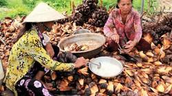 Cà Mau: Dân kiếm tiền dễ từ trái của loài cây mọc hoang dưới nước