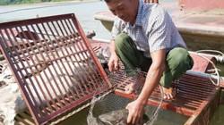 Vay vốn nuôi cá lồng trên sông Lô, nhiều hộ thoát nghèo, khấm khá
