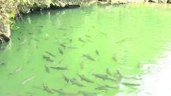 Ngoài suối cá thần, Thanh Hóa còn hang cá thần nằm ở huyện nào?