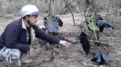 Lộ thêm sai phạm của công ty để dầu thải tràn ra sông Hiếu