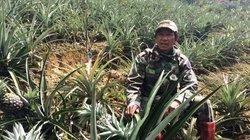 Lâm Đồng: Đất khô cằn, trồng xen canh vẫn nhanh có tiền