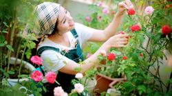 Sân thượng rộn ràng hương sắc hoa hồng, vạn người mơ ước của mẹ đảm xinh đẹp