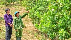 Hội giúp nông dân Mô Rai phát triển cây điều, mong mang về no ấm