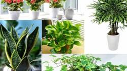TOP 5 loài cây trồng vừa mang phong thủy lại phòng chống ung thư