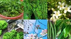 """7 loại rau rừng tên lạ- """"đặc sản"""" ăn là nghiện của đồng bào Tây Bắc"""