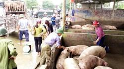 """Giá heo hơi hôm nay 23/11: Kì lạ giá lợn tăng """"nóng"""", chợ lại ế ẩm"""