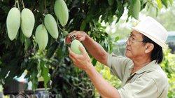 Tín hiệu vui giữa lúc xuất khẩu rau quả sang Trung Quốc sụt giảm