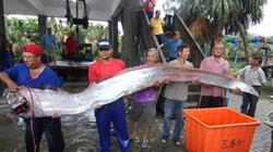 Lại bắt được thủy quái khủng hình dáng lạ, dài 4m nặng hàng trăm kg
