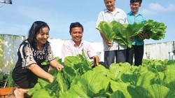 Cà Mau: Phường văn minh thi đua trồng rau thùng xốp, sân thượng, nhà ăn, đem biếu, còn đâu mới bán