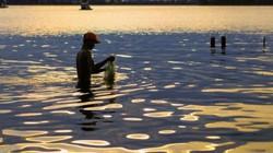 Khám phá Hồ Tây (kỳ 11): 'Ổi Quảng Bá, cá Tây Hồ'