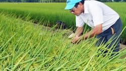 Tri ân nhóm nghiên cứu lúa ST25 đạt giải gạo ngon nhất thế giới