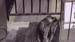 Video:Người đàn ông TQ vứt túi đen bên đường, chiếc túi động đậy và điều đau lòng đằng sau