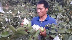 """Thái Nguyên: Trồng lung tung như """"vườn rậm"""" vẫn thu 300 triệu/năm"""