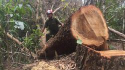Để mất nhiều diện tích rừng, GĐ Cty lâm nghiệp Ea Kar chỉ bị kỷ luật khiển trách