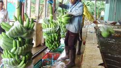 Bình Dương: Nông nghiệp công nghệ cao vươn lên mạnh mẽ