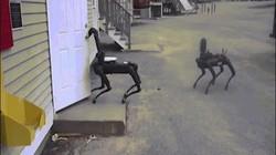 Mỹ: Robot chó kỳ dị lần đầu tiên được cảnh sát thử nghiệm, nhiều người lo sợ