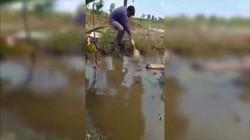 Clip: Màn câu cá bằng chân gà cực đỉnh khiến ai cũng trầm trồ