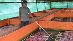 Nuôi lươn không bùn trong bể xi măng, bán 200-230.000 đồng/ký