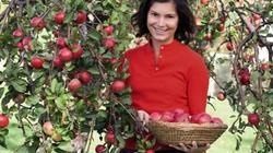 """""""Đột nhập"""" vào trang trại táo lạ siêu đắt, đỏ rực từ trong ra ngoài"""