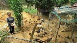 Dựa vào rừng, đồng bào Giẻ Triêng thoát nghèo lại có trăm triệu