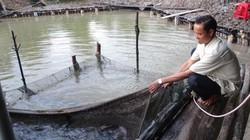 Cà Mau: Dân bắt cá thòi lòi, ốc len đặc sản để khách tới ăn, chơi