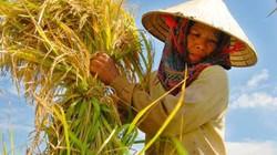 Nông dân muốn nói thật với Thủ tướng: Trồng lúa được 70.000đ/ngày