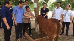 """""""Ngân hàng bò"""" trao cơ hội thoát nghèo cho nông dân Kinh Bắc"""