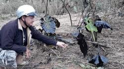 Vụ tràn 200 lít dầu thải ra sông Hiếu: Xử phạt 7,5 triệu đồng