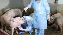 """Chăn nuôi an toàn sinh học: """"Chìa khóa"""" phòng chống dịch tả lợn Châu Phi"""
