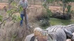 Úc: Bắt được cá sấu khổng lồ hung dữ dài hơn 5m