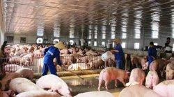 """Chăn nuôi an toàn sinh học: Giải pháp để vượt qua """"bão dịch"""""""