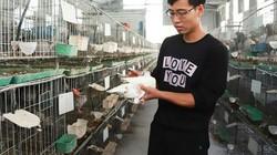 """Trai Việt Trì nuôi chim bồ câu Pháp, mỗi tháng """"đút túi"""" hơn 25 triệu"""