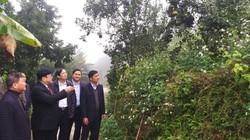 Chủ tịch Hội NDVN gợi ý cách nâng tầm cam đặc sản Hà Giang