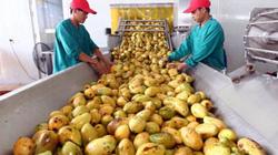 Bộ trưởng Bộ NNPTNT: Chuỗi giá trị ngắn, nông sản đối mặt rủi ro