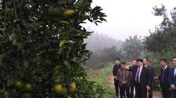 Xây dựng chi hội nông dân 3 trong 1 cho vùng cây đặc sản Hà Giang