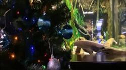 Lươn điện đăng status lên mạng xã hội, tự thắp sáng cây thông Noel