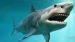 Giải mã về sát thủ đại dương không có xương nhưng lại có sức mạnh kinh hoàng