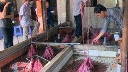 Tiền Giang: Có của ăn của để nhờ nuôi lươn đẻ bán con giống